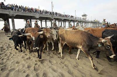 4-cows-pier.jpg