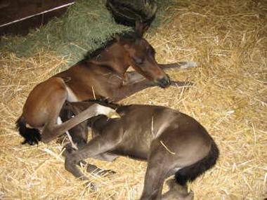 3twin-foals-380.jpg
