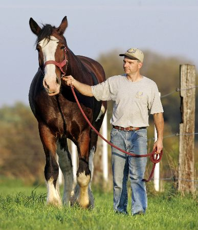 ken-airgood-with-one-of-the-horses-he-will-be-showing-at-the-world-clydesdale-show-this-weekend.jpg