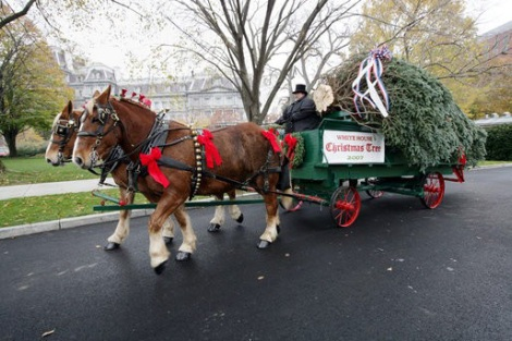 2delivering-the-white-house-christmas-tree-2.jpg