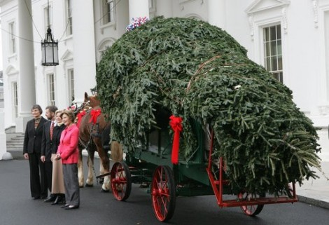 4-official-white-house-christmas-tree-arrives-2.jpg