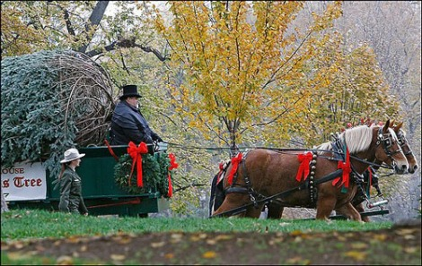 white-house-xmas-tree-arrives-2.jpg