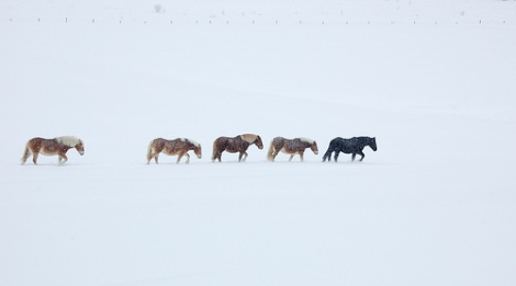 horse-trail-in-snow