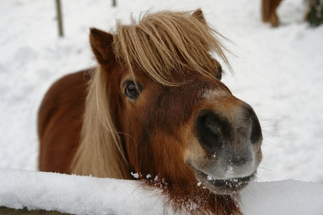 pony-snow