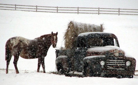 winter-hay-delivery