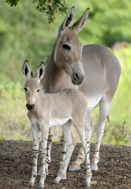 Rare Horse Breeds | Simply Marvelous Horse World